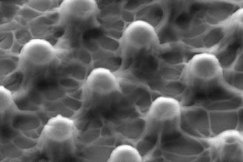 Micrograph of micropillar array