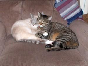 Boomer and Cleo