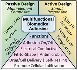 Multifunctional Biomedical Adhesives passive design active design functions