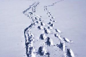 Track n Trail