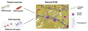 Zhao Natural ECM