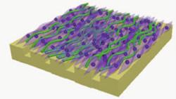 Fibroblast Cell Sheet