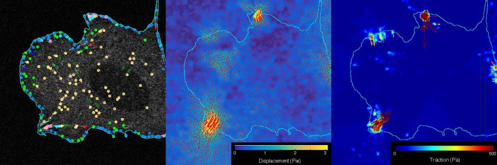L to R: adhesion segmentation, displacement map, and tracking map. Photo credit: Sangyoon Han, Michigan Tech
