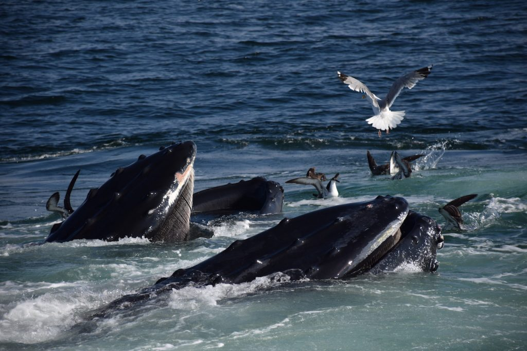 Whales and birds