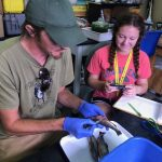 Biological sciences graduate student Chris Adams works in the GLRC  fisheries lab with STEM intern Riley Stoppa.