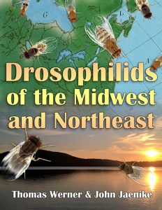 Cover of Drosophilids of the Midwest and Northeast