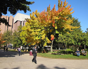 Michigan Tech Campus Fall