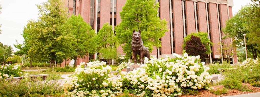 Husky Statue